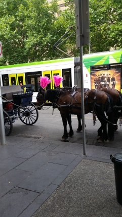 People in Melbourne dress nicely. Horses, I guess, must follow suit.